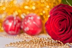 Red rose. closeup. Royalty Free Stock Images