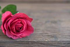Red rose closeup Royalty Free Stock Photo