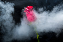 Red rose in clouds of smoke Royalty Free Stock Image