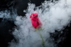Red rose in clouds of smoke Stock Photo