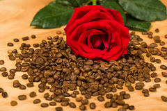 Red rose on coffee seeds and wooden background Royalty Free Stock Photos