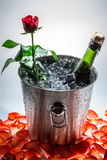 Red rose and cold champagne for Valentine's Day Royalty Free Stock Photos