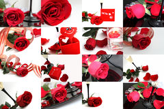 Red rose collage Royalty Free Stock Photos