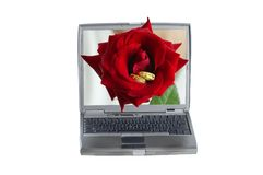Red rose and a computer Royalty Free Stock Image