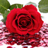 Red rose and confetti Royalty Free Stock Photography