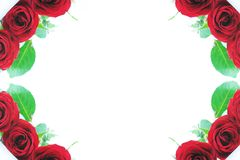Red rose corner borders Royalty Free Stock Image
