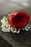 Red Rose Corsage Stock Images