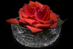 Red rose in crystal bowl Royalty Free Stock Photos