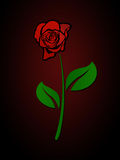 Red Rose In The Dark. With red background Stock Photography