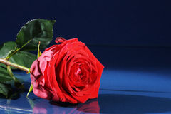 Red rose on dark underground Royalty Free Stock Images