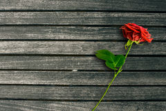 Red rose on dark wood background Royalty Free Stock Photo