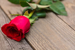 Red rose on a dark wooden background. Women' s day, Valentines D Royalty Free Stock Images