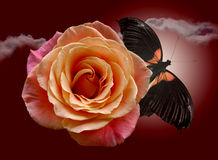 Red rose and darkenning butterfly. On background sky stock photography