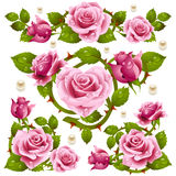 Red Rose design elements Royalty Free Stock Image