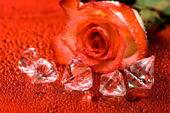 Red rose and diamond crystals Stock Photo
