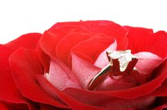 Red rose with diamond ring Royalty Free Stock Images