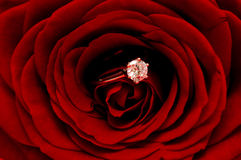 Red Rose with diamond ring. Red rose with a diamond ring inside Royalty Free Stock Photo