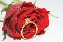 Red rose and diamond solitaire in bridal tears Royalty Free Stock Images