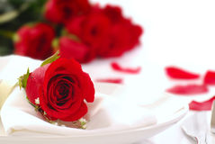 Red rose on a dinner plate with rose petals. Single red rose on a dinner plate with roses and rose petals in the background Royalty Free Stock Photography
