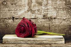 Red rose on documents Royalty Free Stock Photos