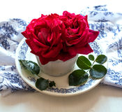 Red rose e still life for Valentine's Day Royalty Free Stock Photos