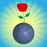 Red rose from earth Stock Image