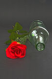 Red rose with empty bottle on a black background Stock Photography