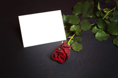 Red rose with empty card. Stock Photos