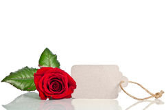 Red rose with empty tag for your text Stock Photo
