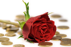 Red rose on euro coins Stock Photos