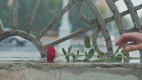 Red rose falling in dirty puddle. Valentine`s day. The concept of a quarrel and a divorce