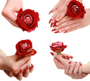 Red rose in a female hand Royalty Free Stock Images