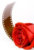 Red rose and film. Gorgeous red Rose with film.  ISOLATED Stock Image