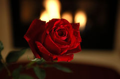 Red rose with fire place stock image