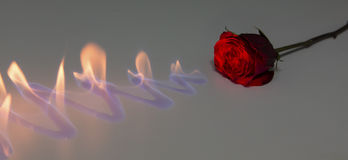 Red rose with fire on shiny surface in studio Royalty Free Stock Image