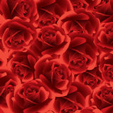 Red rose floral background. Stock Image