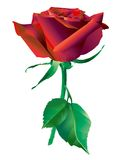 Red_rose_flower illustration libre de droits