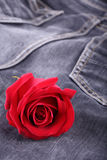 Red rose flower on black jeans texture Stock Images