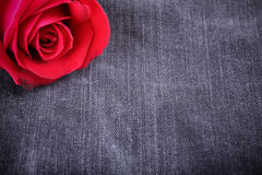 Red rose flower on black jeans texture Royalty Free Stock Images
