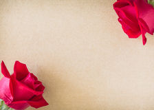 Red rose flower on blank paper Royalty Free Stock Images