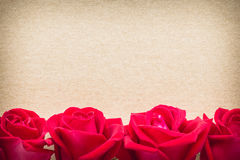 Red rose flower on blank paper page for creative Royalty Free Stock Image
