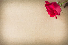 Red rose flower on blank paper page for creative Royalty Free Stock Images