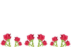 RED rose flower border Royalty Free Stock Images