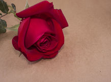 Red rose 90 Stock Photos