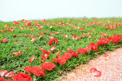 Red rose flower fall on mound Royalty Free Stock Images