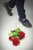 Red rose flower on floor Stock Images