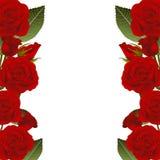 Red Rose Flower Frame Border. isolated on White Background. Vector Illustration.  stock illustration