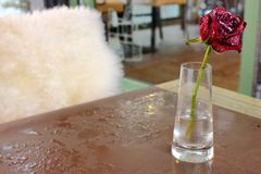 Red rose flower in frost on wet table of outdoor cafe. Winter freezing flower. Romantic concept. Banquet background. Love concept. Lonely flower royalty free stock photo