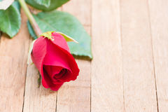 Red rose flower in a glass. Red rose flower on wood background Stock Image