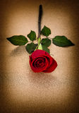 Red rose. Flower golden background vintage Stock Image